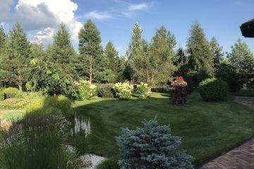 посаженные деревья, цветущие кусты